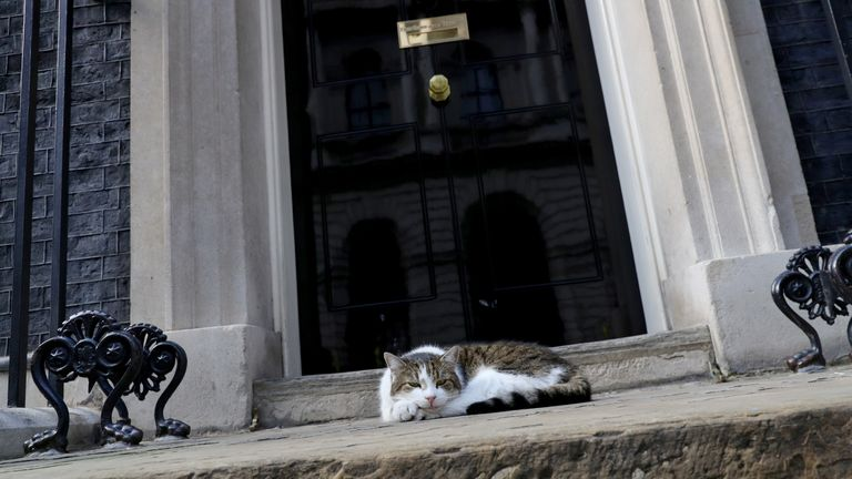 Larry the cat lies in the sun in Downing Street, London.