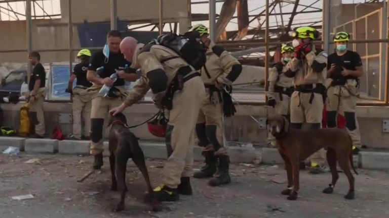 Rescuers use sniffer dogs to search for survivors