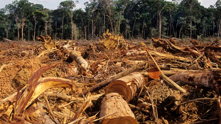 Illegal deforestation takes place in the Amazon rainforest, pictured