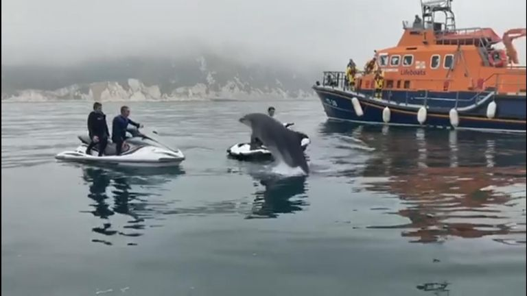 Inquisitive dolphins came to see what was going on after jet skiers got into trouble near Weymouth, Dorset