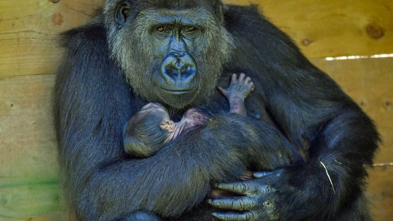 The baby arrived a year after its mother lost her first born