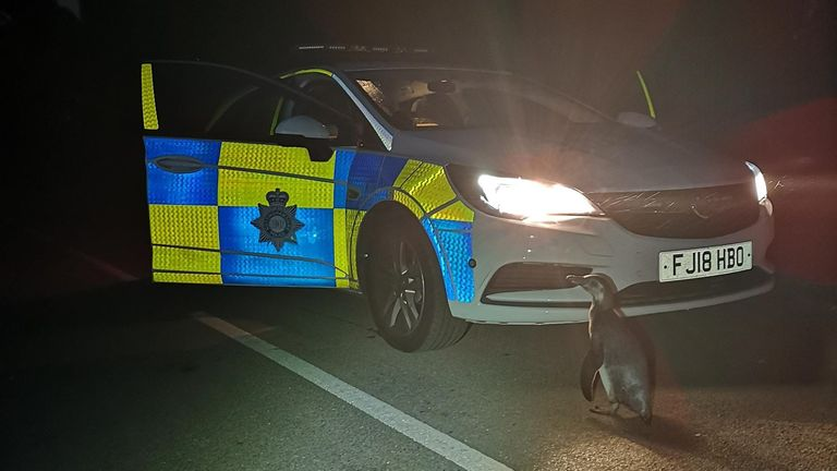 Police spotted the penguin while on patrol in Strelley, Nottinghamshire