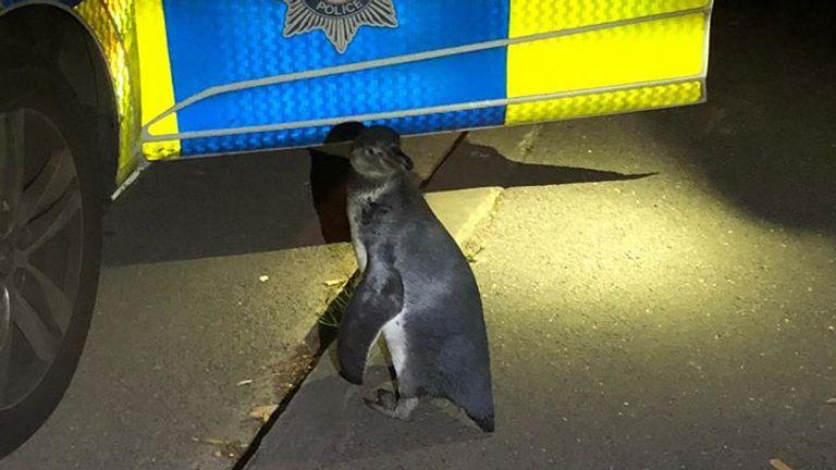 Officers named the penguin Po-Po