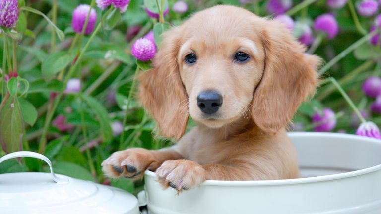 Dachshund puppies went up the most, by 89%