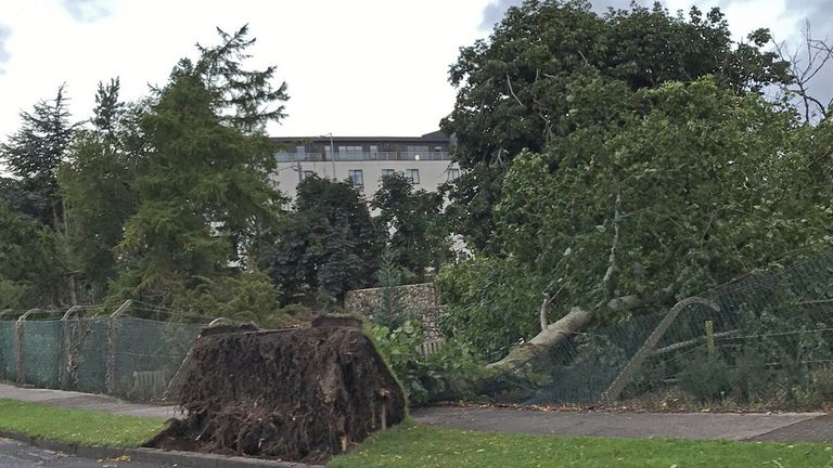 A fallen tree in Cabinteely, County Dublin as Storm Ellen hit Ireland and western parts of Britain. Pic: Lawrence Hill