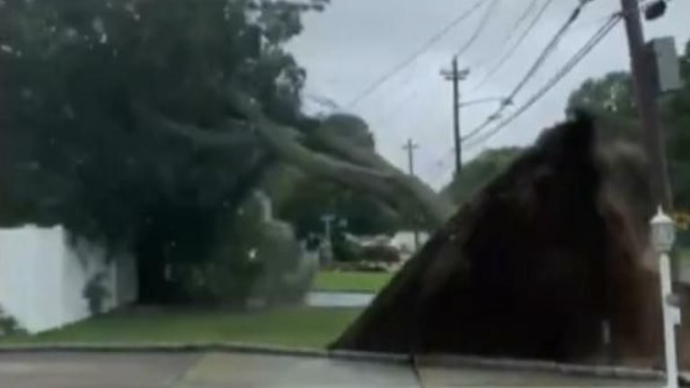 Storm Isaias takes down trees