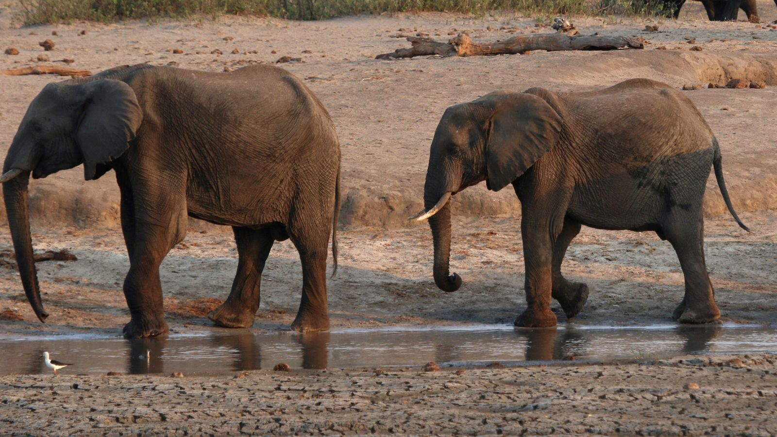 Botswana: Deaths of more than 300 elephants caused by bacteria in water