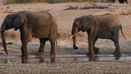 Investigations have been carried out into the deaths of elephants in Botswana and Zimbabwe