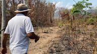 Burnt out cocoa farm
