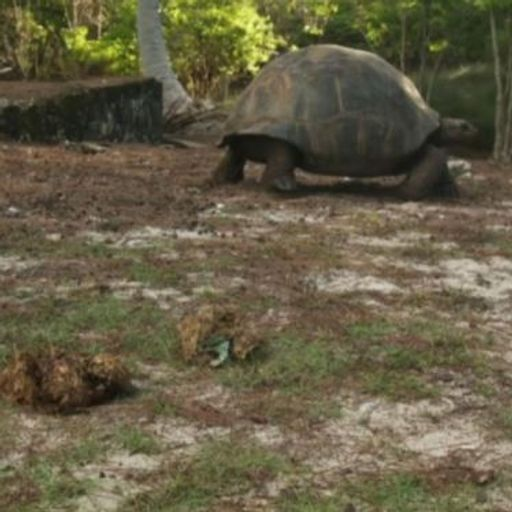 Flip-flop found in poo of endangered tortoise