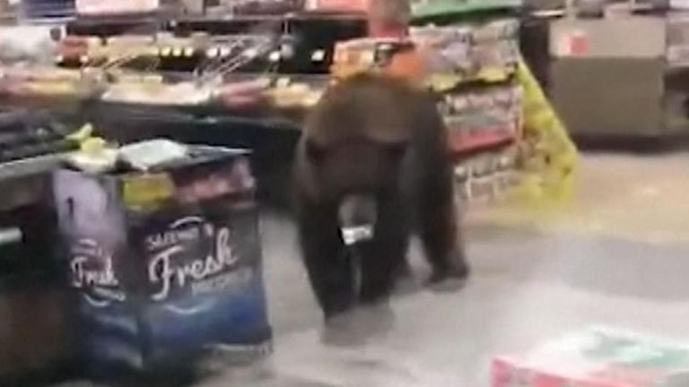 Shoppers found an otherwise routine trip to the store on disrupted by an inquisitive bear in the produce aisle
