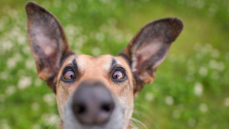 Elke Vogelsang/Mars Petcare Comedy Pet Photo Awards 2020