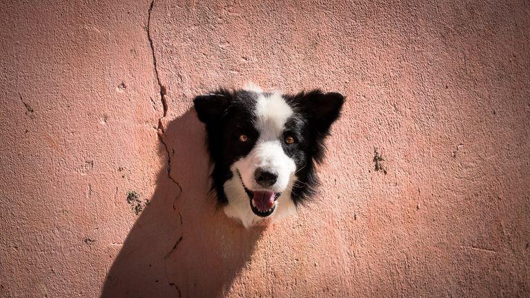 Antonio Peregrino/Mars Petcare Comedy Pet Photo Awards 2020