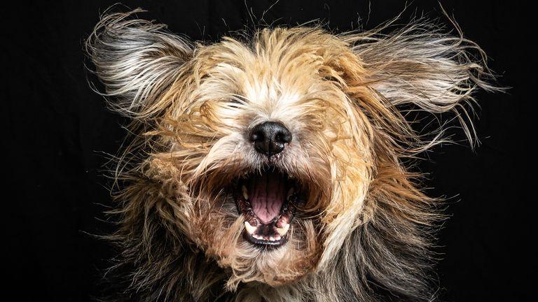 Hetwie van der Putten/Mars Petcare Comedy Pet Photo Awards 2020