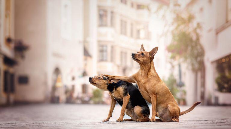 Kerstin Ordelt/Mars Petcare Comedy Pet Photo Awards 2020