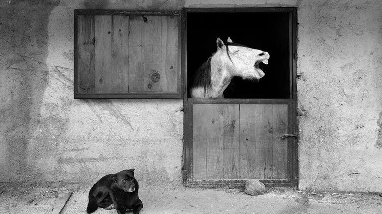 Mehmet Aslan/Mars Petcare Comedy Pet Photo Awards 2020