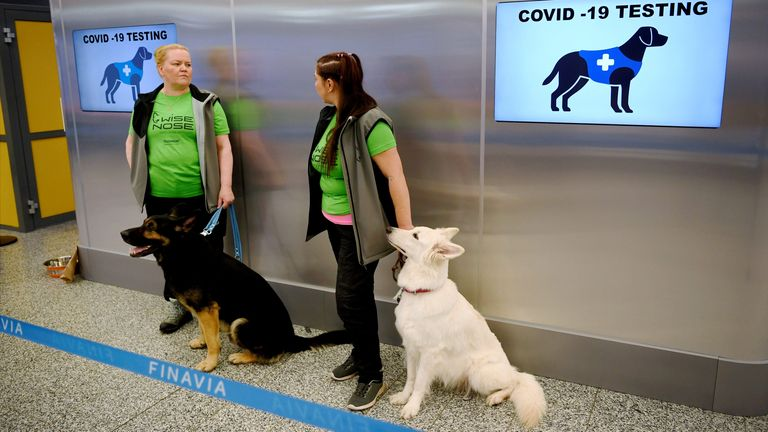 E.T(R) and Valo (L), some of the sniffer dogs being trained to detect the coronavirus from the arriving passengers' samples, is seen at Helsinki Airport in Vantaa, Finland September 22, 2020. Lehtikuva/via REUTERS ATTENTION EDITORS - THIS IMAGE WAS PROVIDED BY A THIRD PARTY. NO THIRD PARTY SALES. NOT FOR USE BY REUTERS THIRD PARTY DISTRIBUTORS. FINLAND OUT. NO COMMERCIAL OR EDITORIAL SALES IN FINLAND.