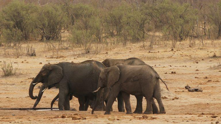 A herd of elephants walk by a watering hole in Hwange National Park in Zimbabwe