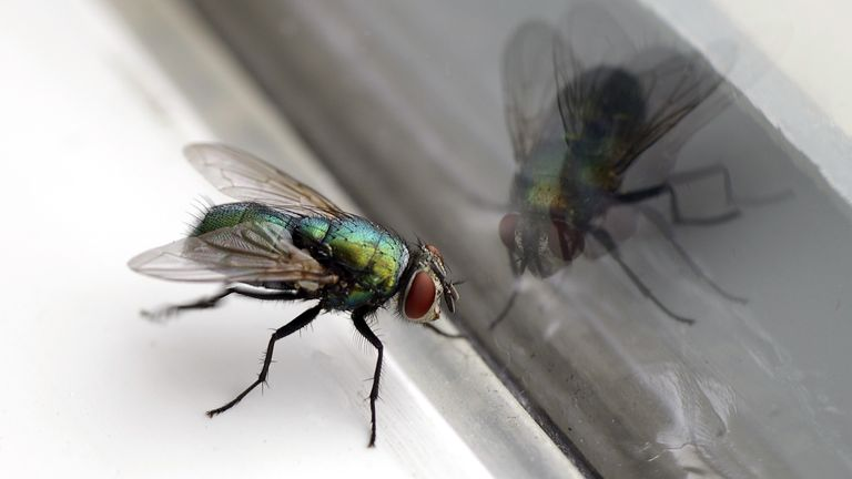 A man in France partly blew up his home after trying to swat a fly