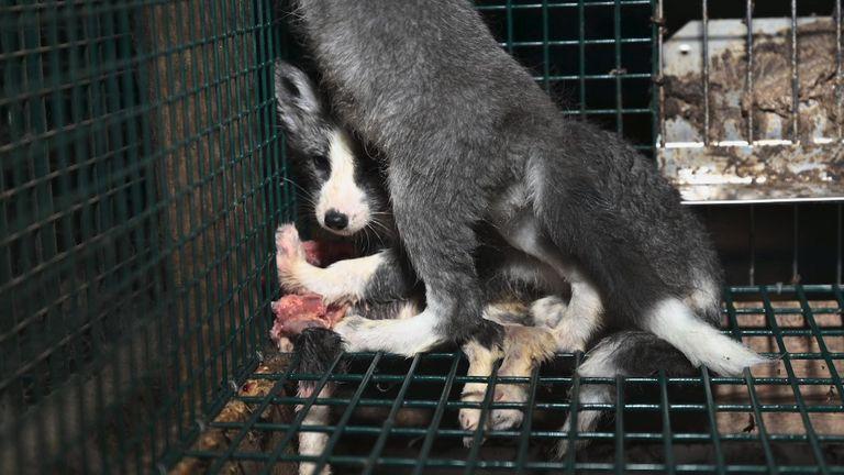 Fur farm July 2020