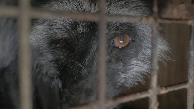 Former British Fur Trade Association tears at the industries treatment of animals.