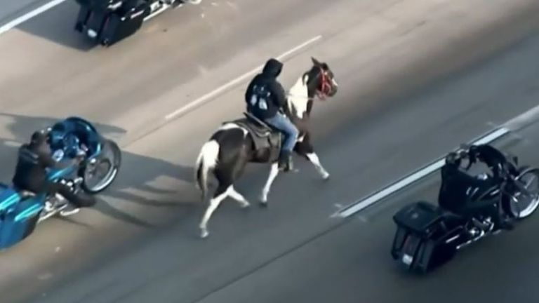 Man rides horse along Chicago highway