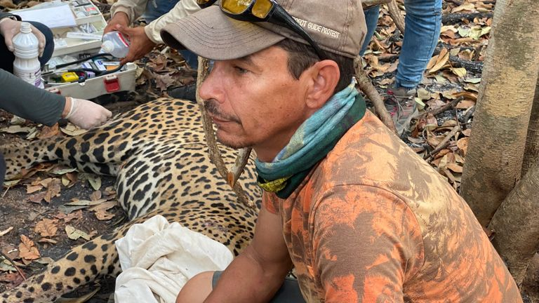 The Pantanal region has been ravaged by fire