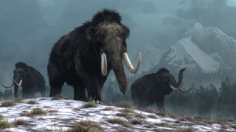 How mammoths may have looked