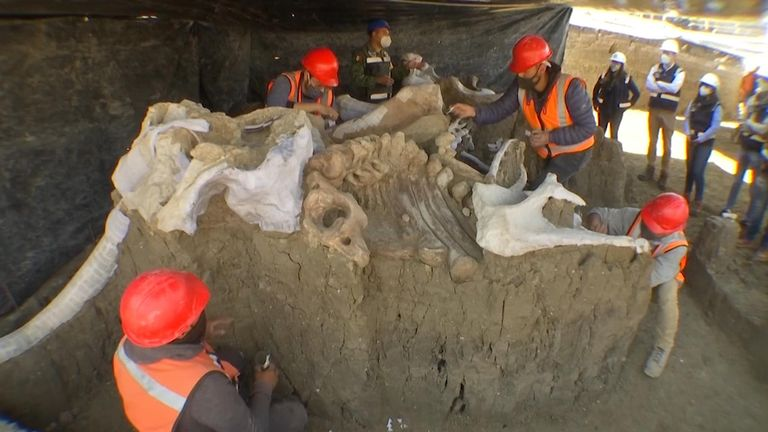 200 mammoths discovered in Mexico