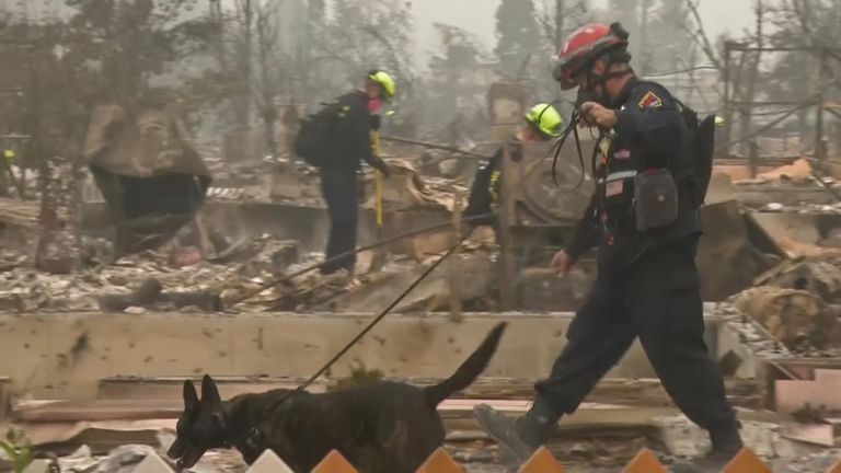 Cadaver dogs search through the embers for victims