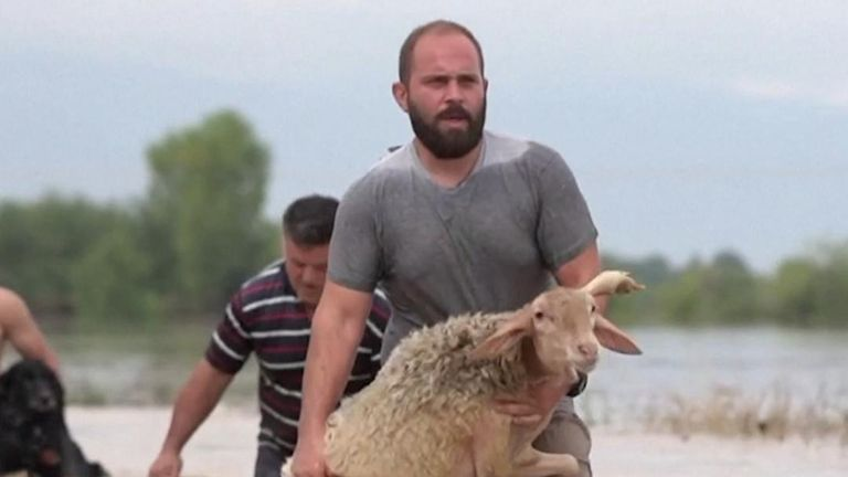 A farmer in the village of Megala Kalyvia carried his sheep through heavy flooding