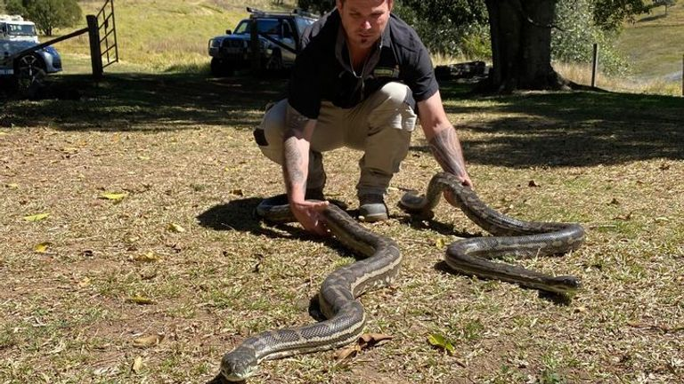 Steven Brown is seen moving the snakes after capturing them inside of the property. Pic: Brisbane North Catchers and Relocation