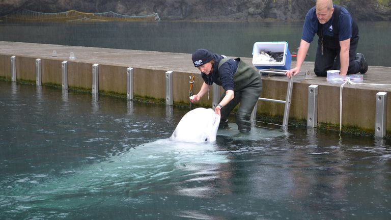 The mission to free beluga whales in captivity in Westman Islands. Pic: Sky News / Adam Parsons