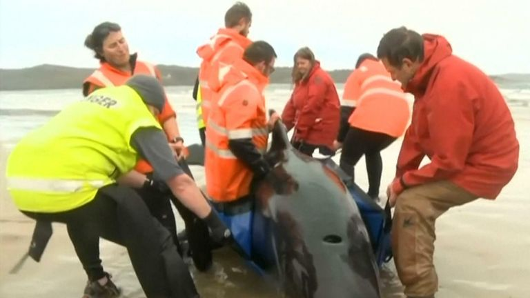 Rescuers try to save stranded whales in Australia