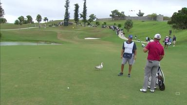 Duck delays play on the PGA Tour!