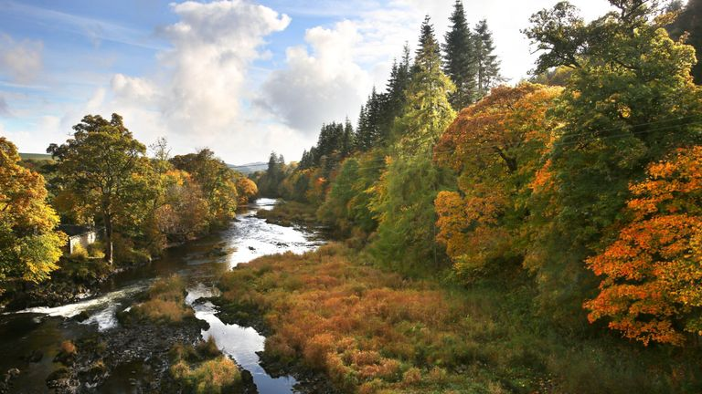 Autumn leaves along the River Tweed in the Scottish Borders.