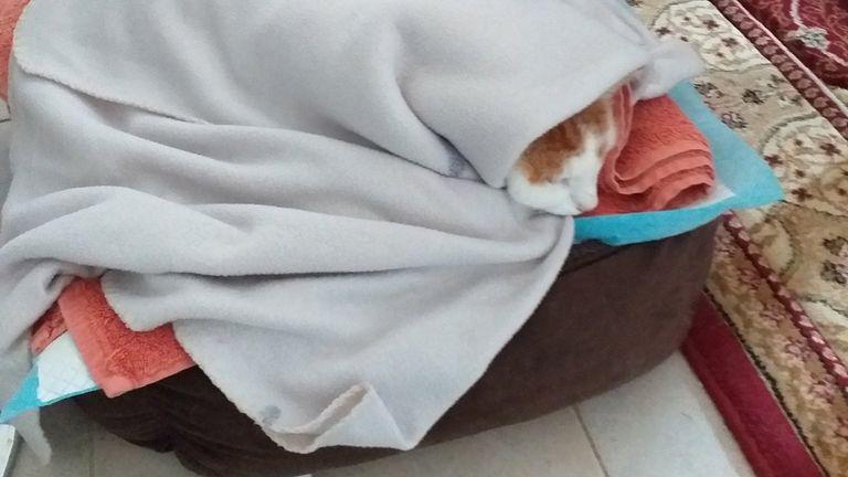 Suzi Kowalski's cat Spot