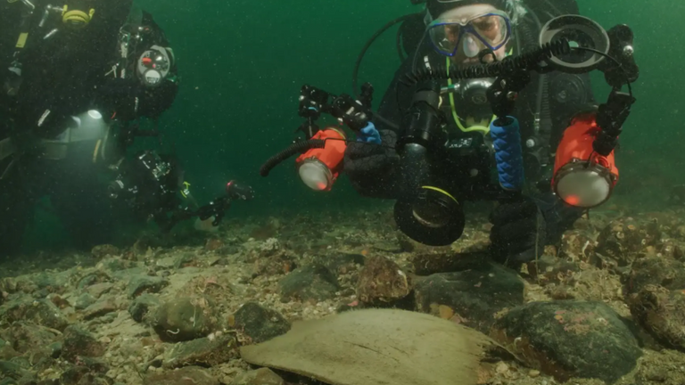 More than 100 of the nearly-extinct fish's eggs were found off the Scottish coastline