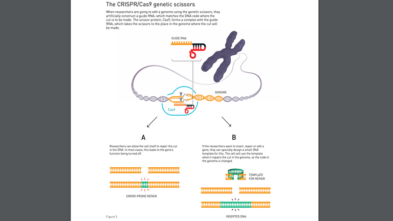 How do the genetic scissors work? Pic: Nobel Committee