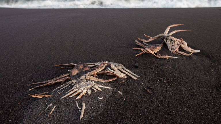 Dead sealife was washing up on the beaches in Kamchatka