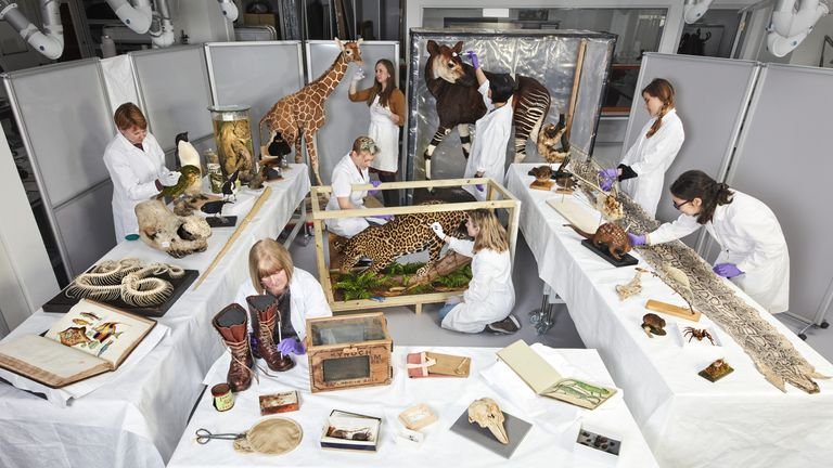 The conservation team have been working on a large range of exhibits