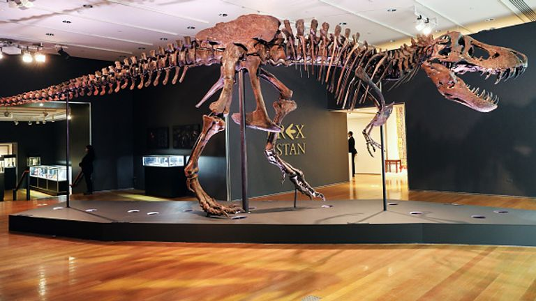 The dinosaur is believed to be 67 million years old and is in nicknamed Stan