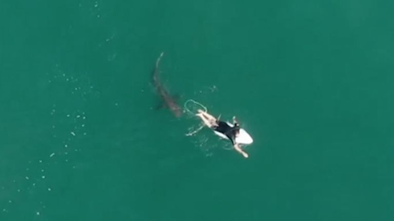 The shark came within inches of the surfer