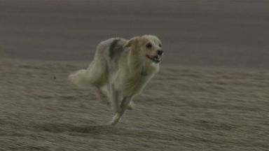Dog on the track in Bahrain!