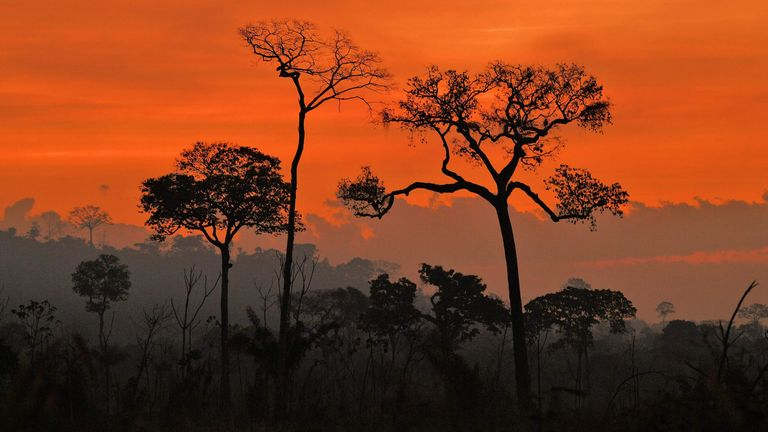 Fires in the Amazon rainforest, south of Novo Progresso in Para state, Brazil,