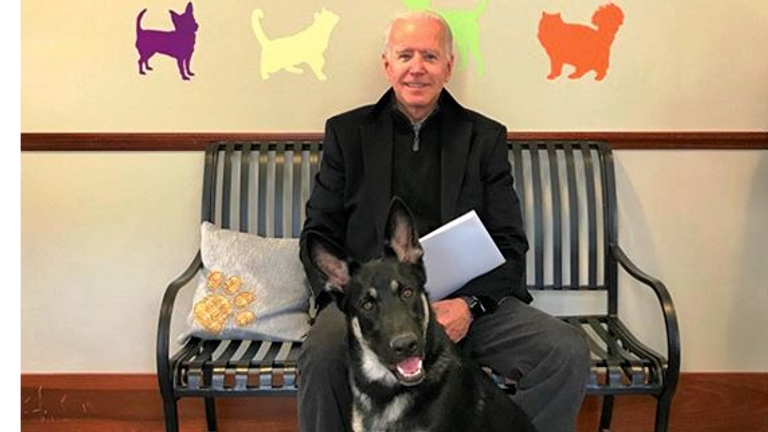 Joe Biden will be the first president to take a rescue dog into the White House. Credit: Delaware Humane Association Instagram