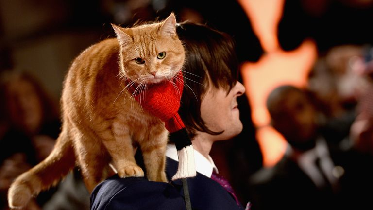 """James Bowen and Bob the cat attend the UK Premiere of """"A Street Cat Named Bob"""" in aid of Action On Addiction on November 3, 2016 in London, United Kingdom. (Photo by Jeff Spicer/Getty Images)"""