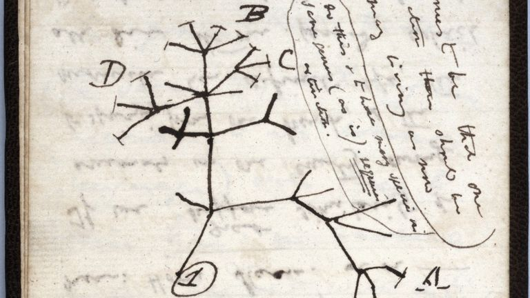 Charles Darwin's 1837 Tree of Life sketch was in one of the notebooks. Pic: Cambridge University Library