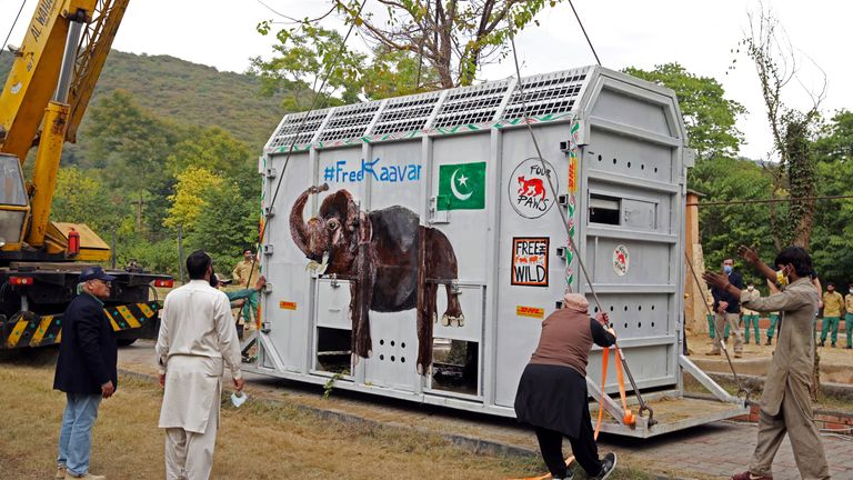 Animal experts gather as a crane uplifting crate carrying Kaavan, an elephant to be transported to a sanctuary in Cambodia, at the Marghazar Zoo in Islamabad, Pakistan