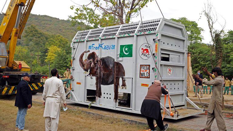 خبراء الحيوانات يجتمعون في قفص رفع رافعة يحمل كفان ، فيل يتم نقله إلى محمية في كمبوديا ، في حديقة حيوانات مرغزار في إسلام أباد ، باكستان